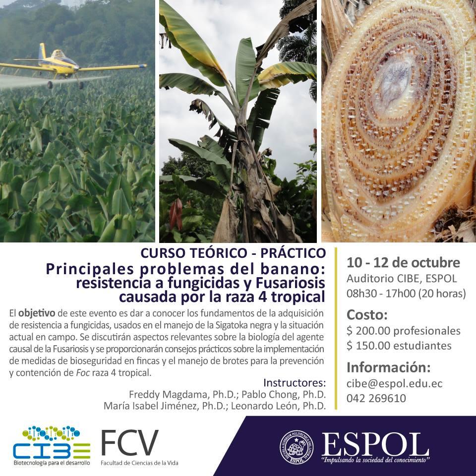 Curso Principales problemas del banano: resistencia a fungicidas y fusariosis causada por la raza 4 tropical